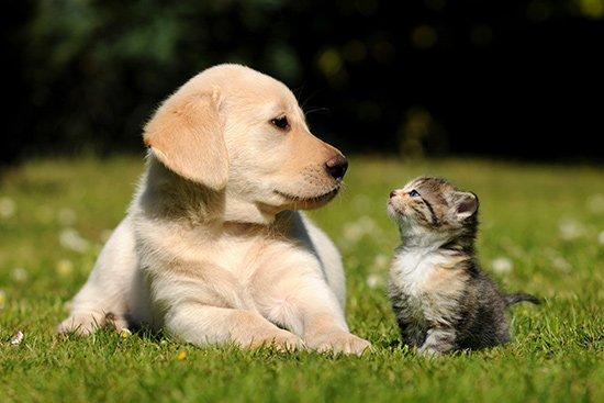Pavasarį išauga šunų ir kačių platinamų ligų grėsmė