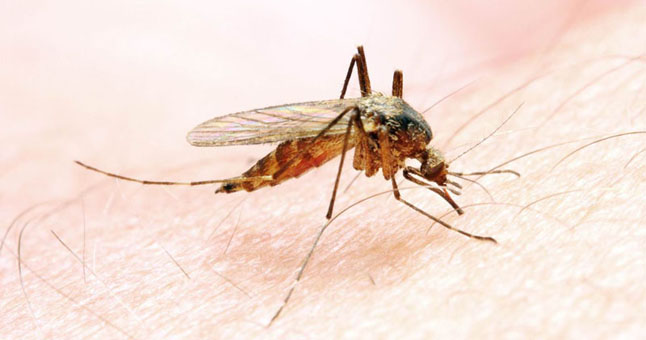 Balandžio 25-oji – Pasaulinė maliarijos diena